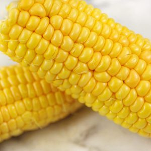 True Gold Corn (Sweet)
