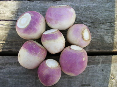 Turnip - Purple Top White Globe